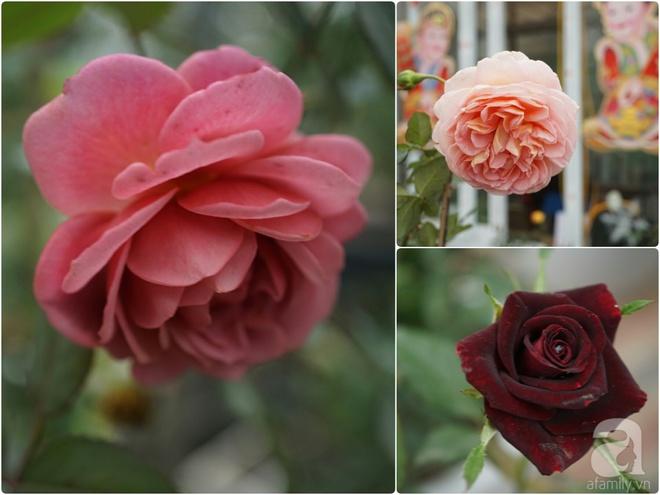 Nữ thạc sỹ nông nghiệp sở hữu các khu vườn hoa hồng với 600 giống hồng nội và ngoại đủ màu sắc - Ảnh 16.