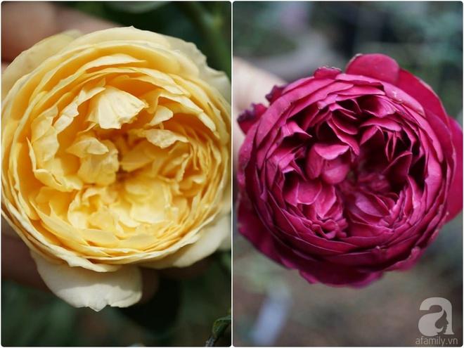 Nữ thạc sỹ nông nghiệp sở hữu các khu vườn hoa hồng với 600 giống hồng nội và ngoại đủ màu sắc - Ảnh 23.