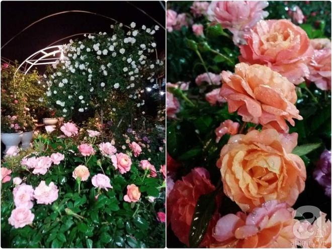Nữ thạc sỹ nông nghiệp sở hữu các khu vườn hoa hồng với 600 giống hồng nội và ngoại đủ màu sắc - Ảnh 24.
