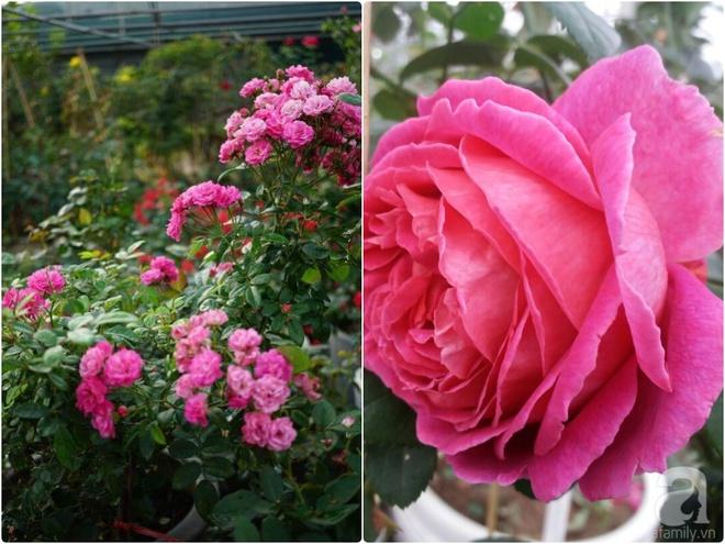 Nữ thạc sỹ nông nghiệp sở hữu các khu vườn hoa hồng với 600 giống hồng nội và ngoại đủ màu sắc - Ảnh 28.