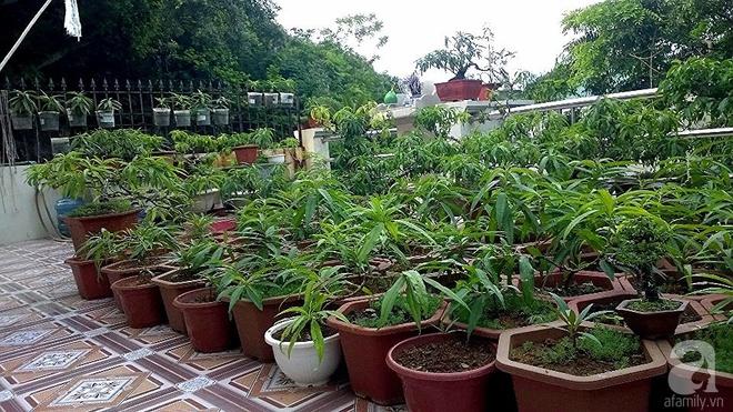 Sân thượng trồng gần trăm gốc đào cổ chi chít quả ở Lạng Sơn - Ảnh 1.