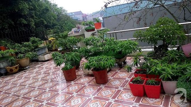 Sân thượng trồng gần trăm gốc đào cổ chi chít quả ở Lạng Sơn - Ảnh 2.