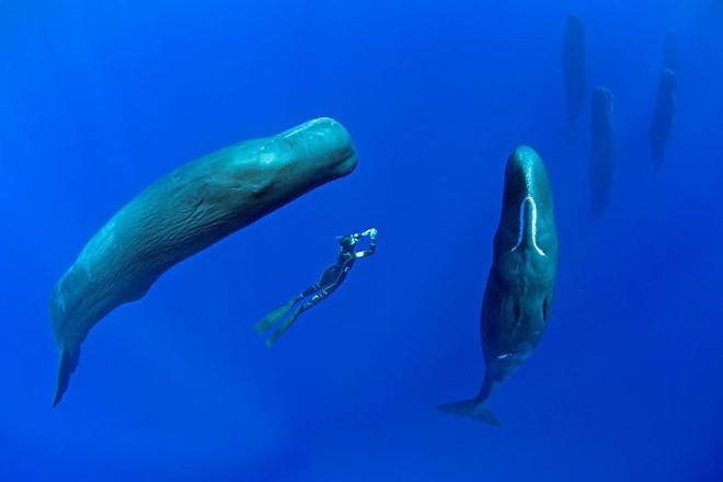 Lặn sâu xuống biển, nhiếp ảnh gia bắt gặp cảnh tượng hiếm chưa ai được thấy - Ảnh 3.
