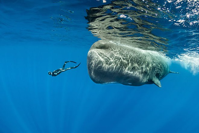 Lặn sâu xuống biển, nhiếp ảnh gia bắt gặp cảnh tượng hiếm chưa ai được thấy - Ảnh 9.