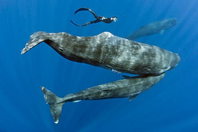 Lặn sâu xuống biển, nhiếp ảnh gia bắt gặp cảnh tượng hiếm chưa ai được thấy - Ảnh 10.