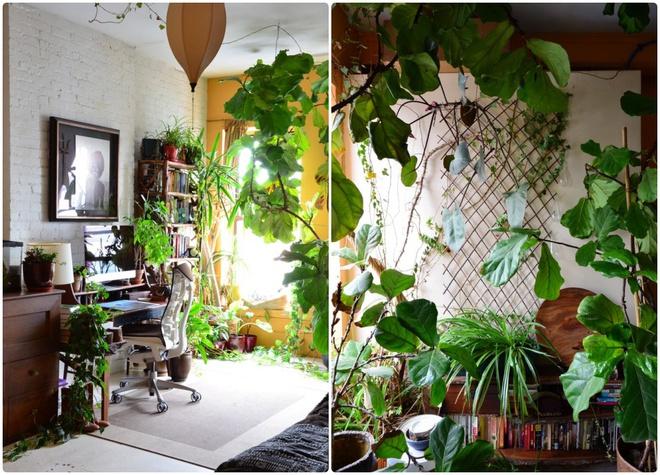 Cô gái độc thân biến căn hộ nhỏ ở chung cư cao tầng của mình thành vườn cây trong phố - ảnh 11