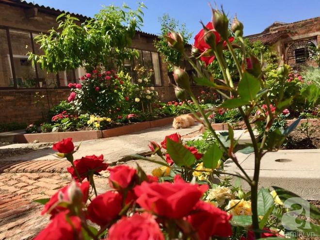 Khu vườn bạt ngàn hoa và rau quả sạch của bà chủ cửa hàng pha lê người Việt trên đất Ý - Ảnh 4.