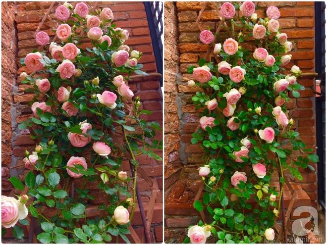 Khu vườn bạt ngàn hoa và rau quả sạch của bà chủ cửa hàng pha lê người Việt trên đất Ý - Ảnh 7.