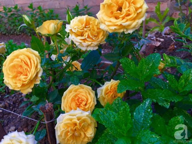 Khu vườn bạt ngàn hoa và rau quả sạch của bà chủ cửa hàng pha lê người Việt trên đất Ý - Ảnh 8.