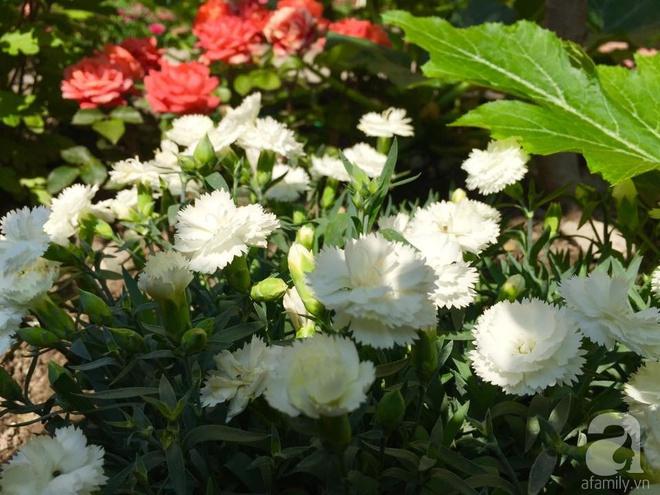 Khu vườn bạt ngàn hoa và rau quả sạch của bà chủ cửa hàng pha lê người Việt trên đất Ý - Ảnh 9.