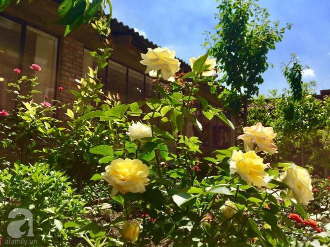 Khu vườn bạt ngàn hoa và rau quả sạch của bà chủ cửa hàng pha lê người Việt trên đất Ý - Ảnh 12.