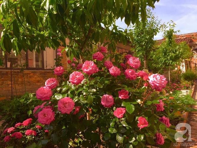Khu vườn bạt ngàn hoa và rau quả sạch của bà chủ cửa hàng pha lê người Việt trên đất Ý - Ảnh 14.