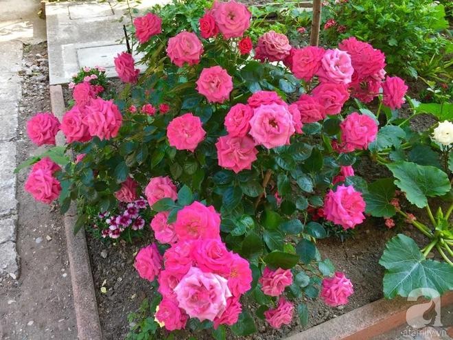 Khu vườn bạt ngàn hoa và rau quả sạch của bà chủ cửa hàng pha lê người Việt trên đất Ý - Ảnh 15.