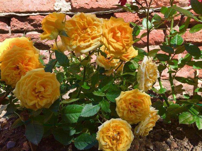 Khu vườn bạt ngàn hoa và rau quả sạch của bà chủ cửa hàng pha lê người Việt trên đất Ý - Ảnh 16.