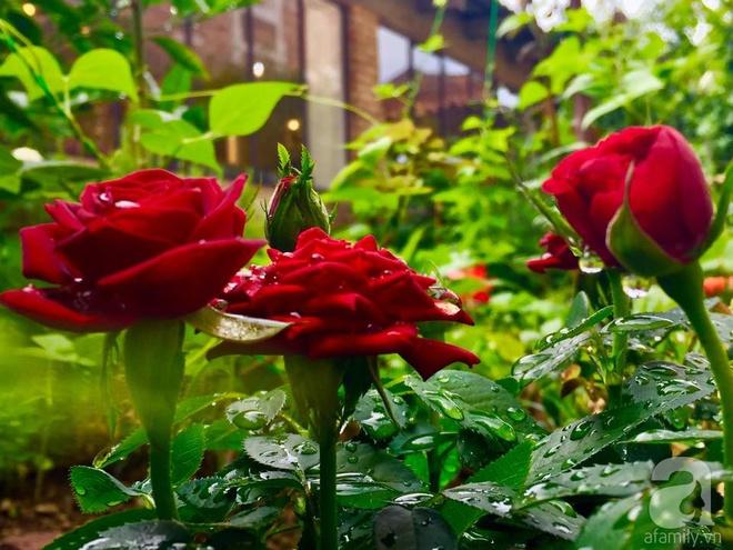 Khu vườn bạt ngàn hoa và rau quả sạch của bà chủ cửa hàng pha lê người Việt trên đất Ý - Ảnh 18.