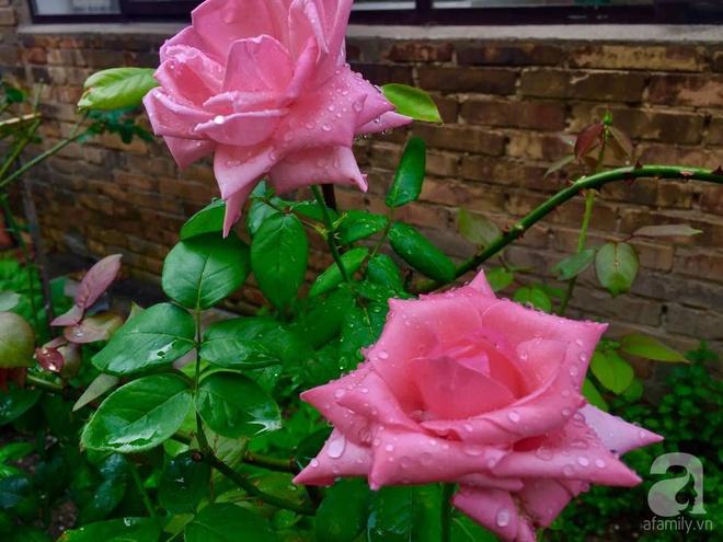 Khu vườn bạt ngàn hoa và rau quả sạch của bà chủ cửa hàng pha lê người Việt trên đất Ý - Ảnh 19.