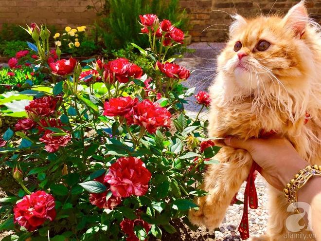 Khu vườn bạt ngàn hoa và rau quả sạch của bà chủ cửa hàng pha lê người Việt trên đất Ý - Ảnh 20.