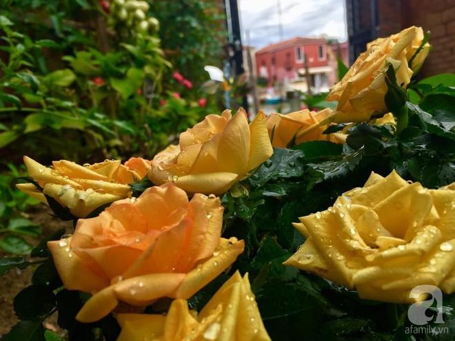 Khu vườn bạt ngàn hoa và rau quả sạch của bà chủ cửa hàng pha lê người Việt trên đất Ý - Ảnh 21.