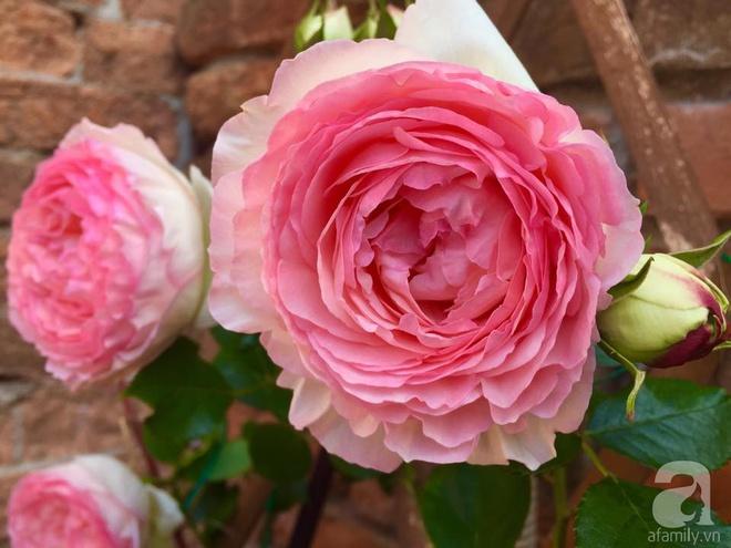 Khu vườn bạt ngàn hoa và rau quả sạch của bà chủ cửa hàng pha lê người Việt trên đất Ý - Ảnh 22.