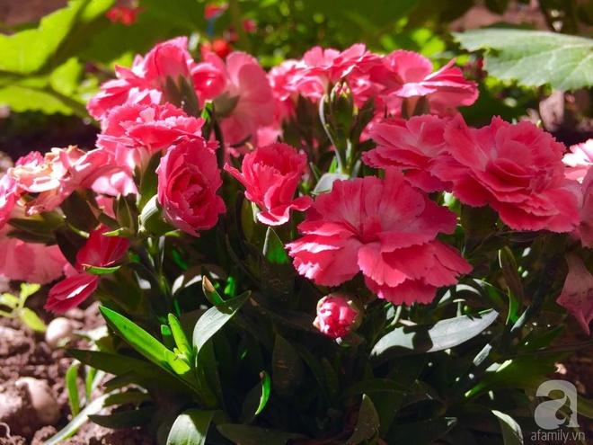 Khu vườn bạt ngàn hoa và rau quả sạch của bà chủ cửa hàng pha lê người Việt trên đất Ý - Ảnh 23.