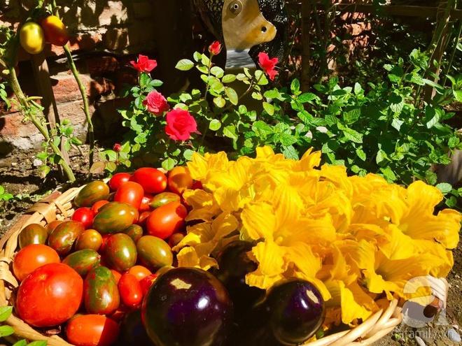Khu vườn bạt ngàn hoa và rau quả sạch của bà chủ cửa hàng pha lê người Việt trên đất Ý - Ảnh 26.