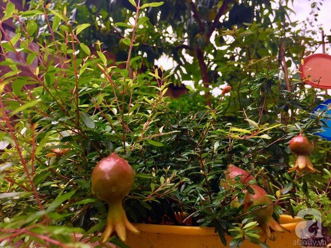 Khu vườn bạt ngàn hoa và rau quả sạch của bà chủ cửa hàng pha lê người Việt trên đất Ý - Ảnh 29.