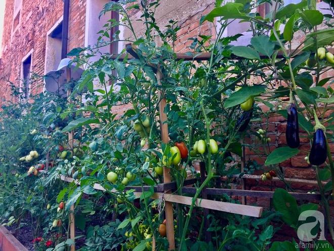 Khu vườn bạt ngàn hoa và rau quả sạch của bà chủ cửa hàng pha lê người Việt trên đất Ý - Ảnh 30.