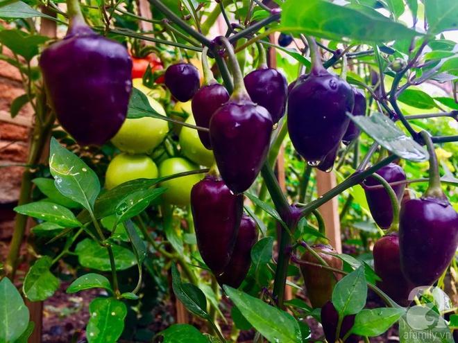 Khu vườn bạt ngàn hoa và rau quả sạch của bà chủ cửa hàng pha lê người Việt trên đất Ý - Ảnh 33.