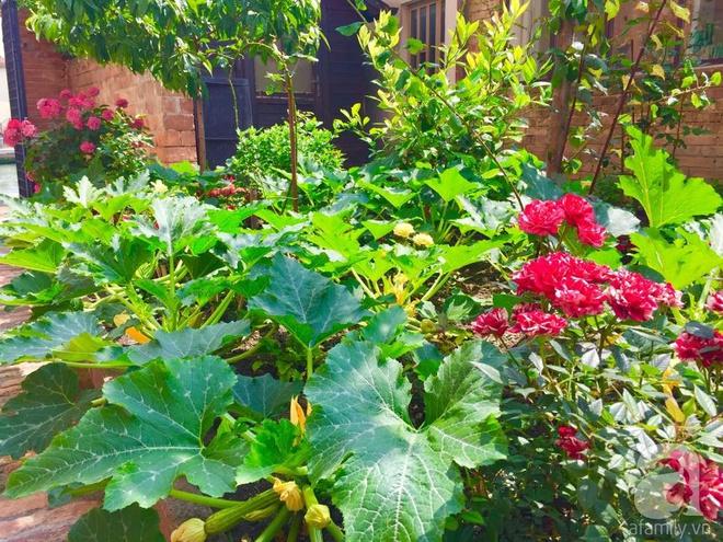 Khu vườn bạt ngàn hoa và rau quả sạch của bà chủ cửa hàng pha lê người Việt trên đất Ý - Ảnh 34.