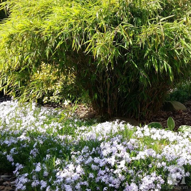 Người phụ nữ gốc Hà Nội dành 14 năm để biến đất trống thành khu vườn như ở xứ sở thần tiên - Ảnh 22.