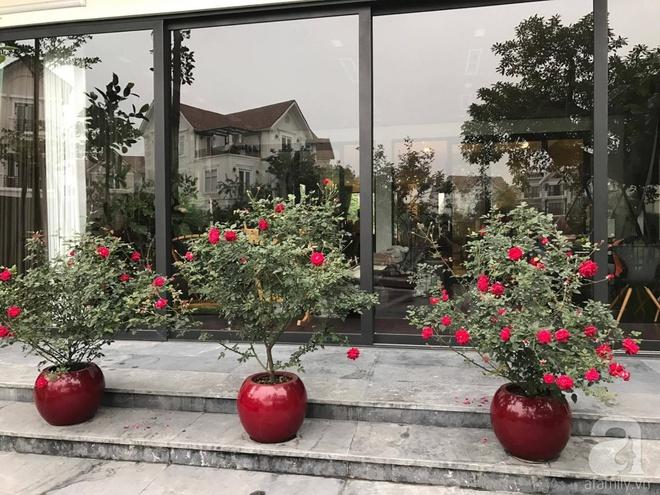 Khu vườn 400m² có những gốc hồng hàng chục năm tuổi đẹp mê hồn ở Hà Nội - Ảnh 1.