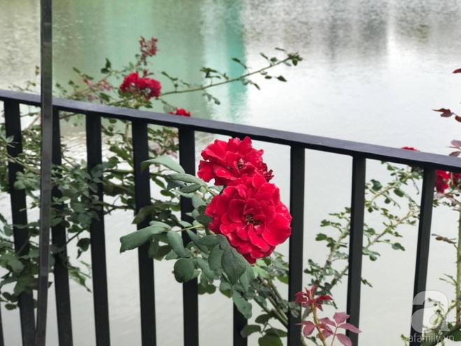 Khu vườn 400m² có những gốc hồng hàng chục năm tuổi đẹp mê hồn ở Hà Nội - Ảnh 24.