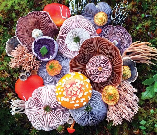 Thì ra trên Trái đất còn có những cây nấm rực rỡ sắc màu đẹp hơn cả hoa thế này - Ảnh 1.