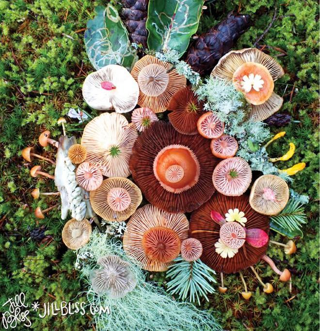 Thì ra trên Trái đất còn có những cây nấm rực rỡ sắc màu đẹp hơn cả hoa thế này - Ảnh 2.