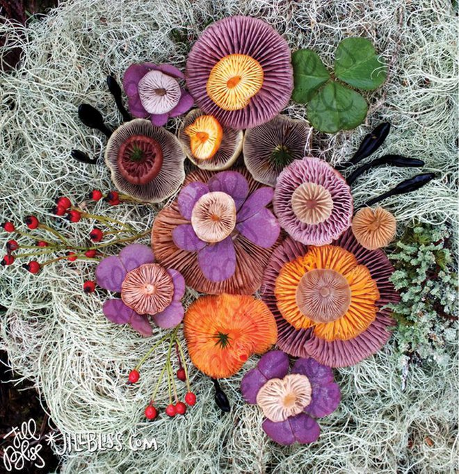 Thì ra trên Trái đất còn có những cây nấm rực rỡ sắc màu đẹp hơn cả hoa thế này - Ảnh 3.