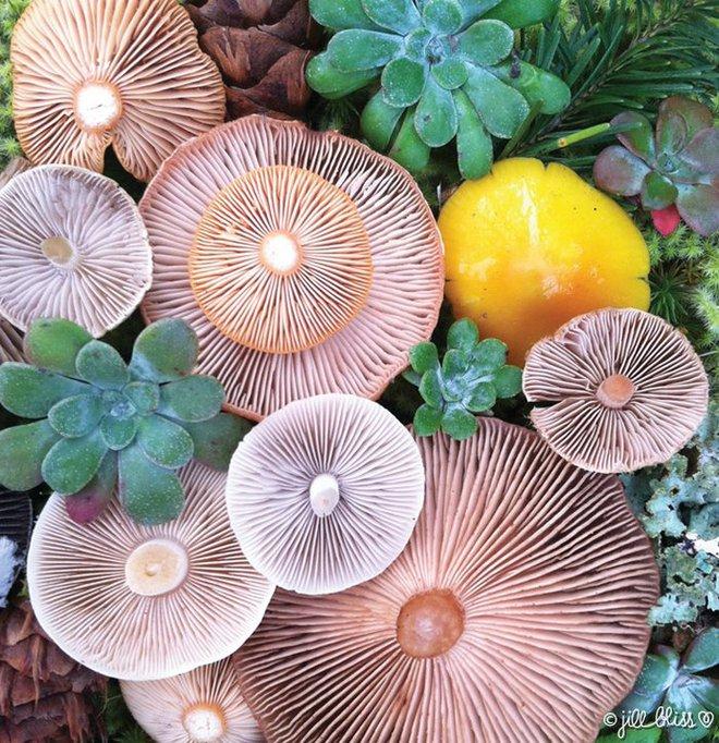 Thì ra trên Trái đất còn có những cây nấm rực rỡ sắc màu đẹp hơn cả hoa thế này - Ảnh 8.