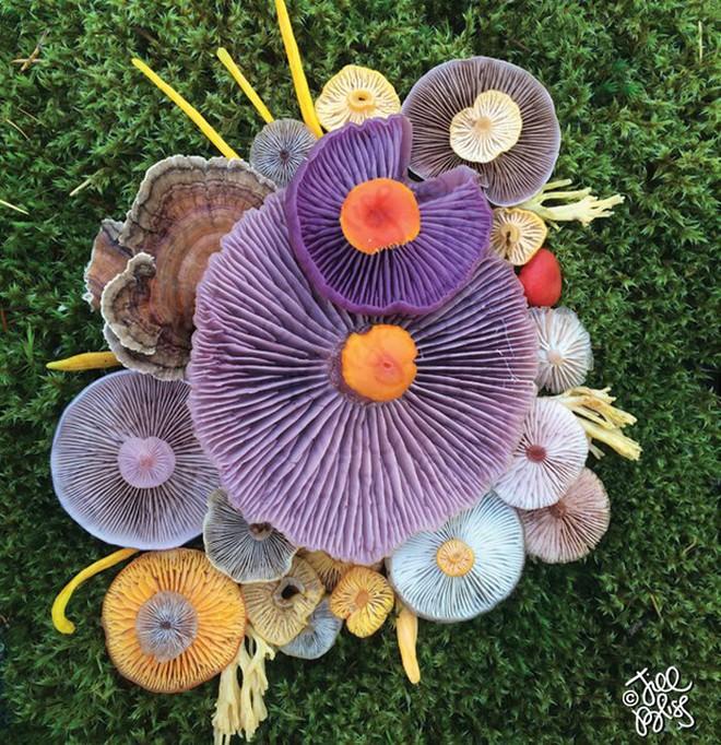Thì ra trên Trái đất còn có những cây nấm rực rỡ sắc màu đẹp hơn cả hoa thế này - Ảnh 9.