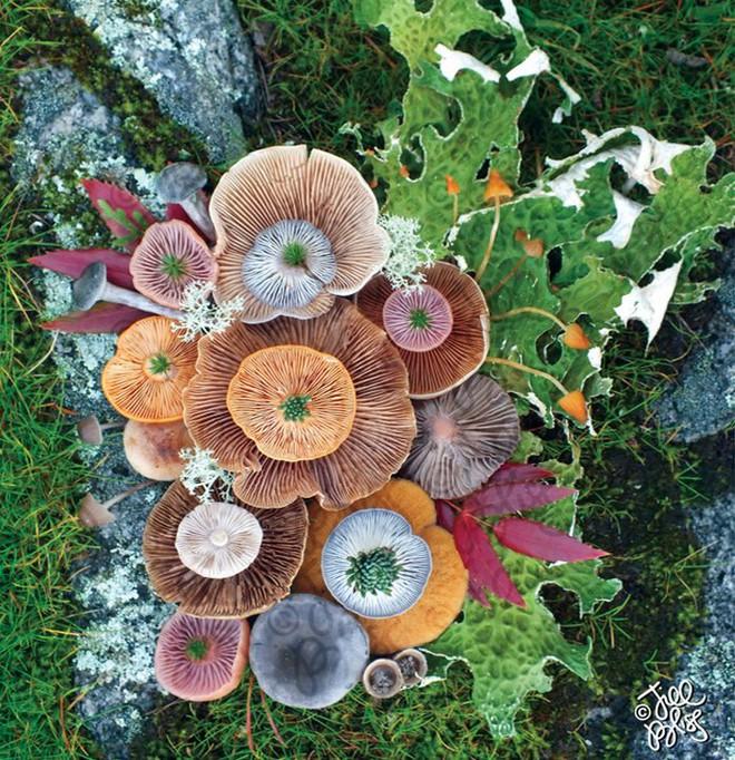 Thì ra trên Trái đất còn có những cây nấm rực rỡ sắc màu đẹp hơn cả hoa thế này - Ảnh 11.