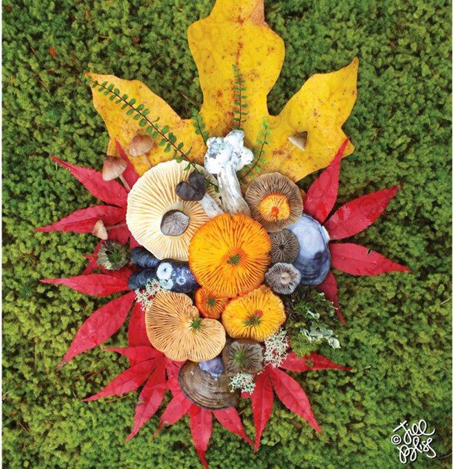 Thì ra trên Trái đất còn có những cây nấm rực rỡ sắc màu đẹp hơn cả hoa thế này - Ảnh 12.
