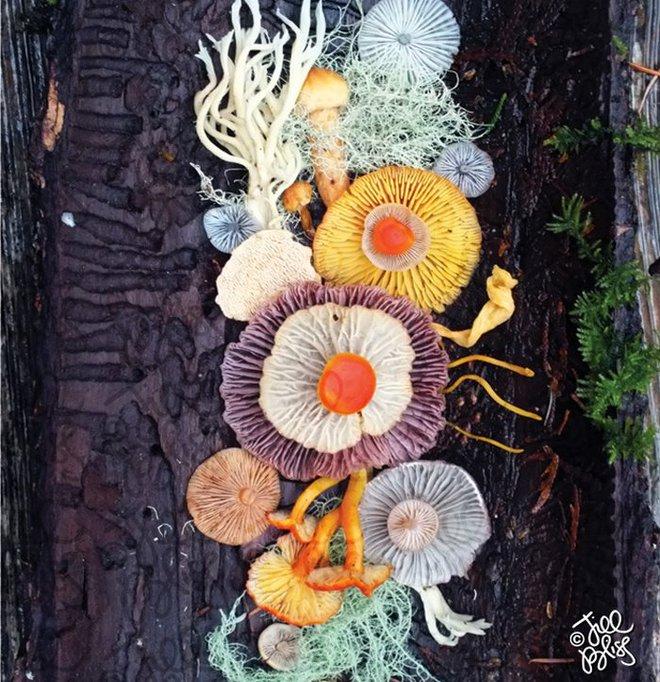 Thì ra trên Trái đất còn có những cây nấm rực rỡ sắc màu đẹp hơn cả hoa thế này - Ảnh 14.
