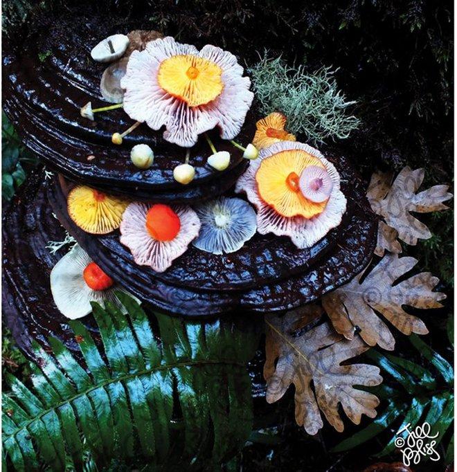 Thì ra trên Trái đất còn có những cây nấm rực rỡ sắc màu đẹp hơn cả hoa thế này - Ảnh 15.