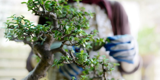 Aqua bonsai – giải pháp mang nghệ thuật xanh tinh tế cho nhà nhỏ - Ảnh 1.