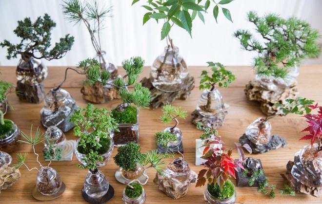 Aqua bonsai – giải pháp mang nghệ thuật xanh tinh tế cho nhà nhỏ - Ảnh 2.