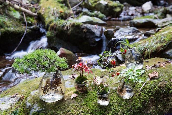 Aqua bonsai – giải pháp mang nghệ thuật xanh tinh tế cho nhà nhỏ - Ảnh 3.