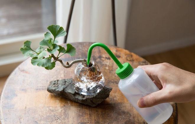 Aqua bonsai – giải pháp mang nghệ thuật xanh tinh tế cho nhà nhỏ - Ảnh 4.