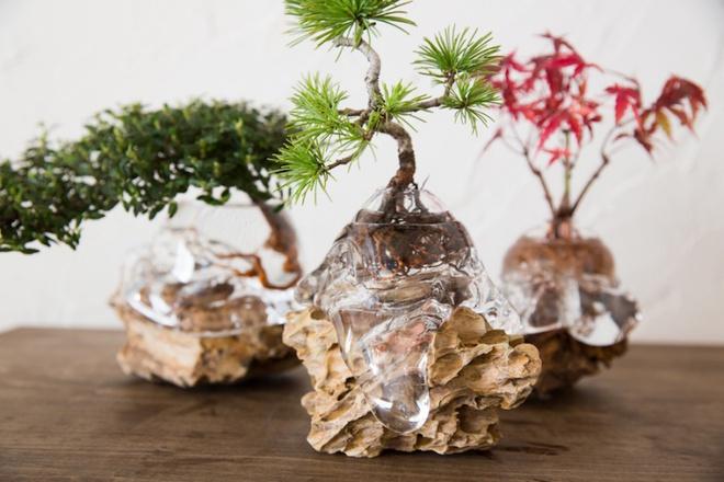Aqua bonsai – giải pháp mang nghệ thuật xanh tinh tế cho nhà nhỏ - Ảnh 5.