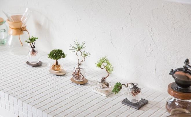 Aqua bonsai – giải pháp mang nghệ thuật xanh tinh tế cho nhà nhỏ - Ảnh 6.