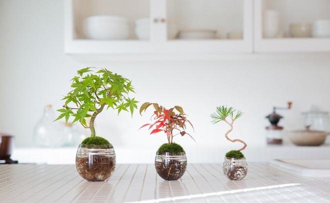 Aqua bonsai – giải pháp mang nghệ thuật xanh tinh tế cho nhà nhỏ - Ảnh 7.