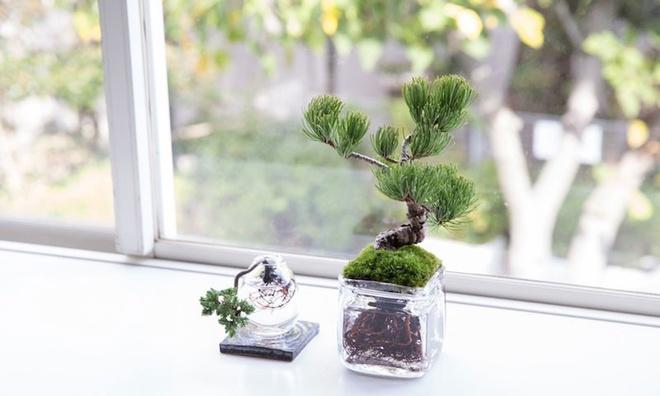 Aqua bonsai – giải pháp mang nghệ thuật xanh tinh tế cho nhà nhỏ - Ảnh 8.