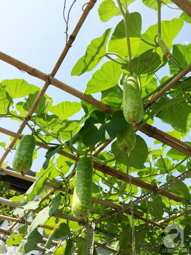 Choáng ngợp trước khu vườn trên sân thượng đầy rau sạch, gà ngon của anh chồng đảm Sài Thành - Ảnh 3.
